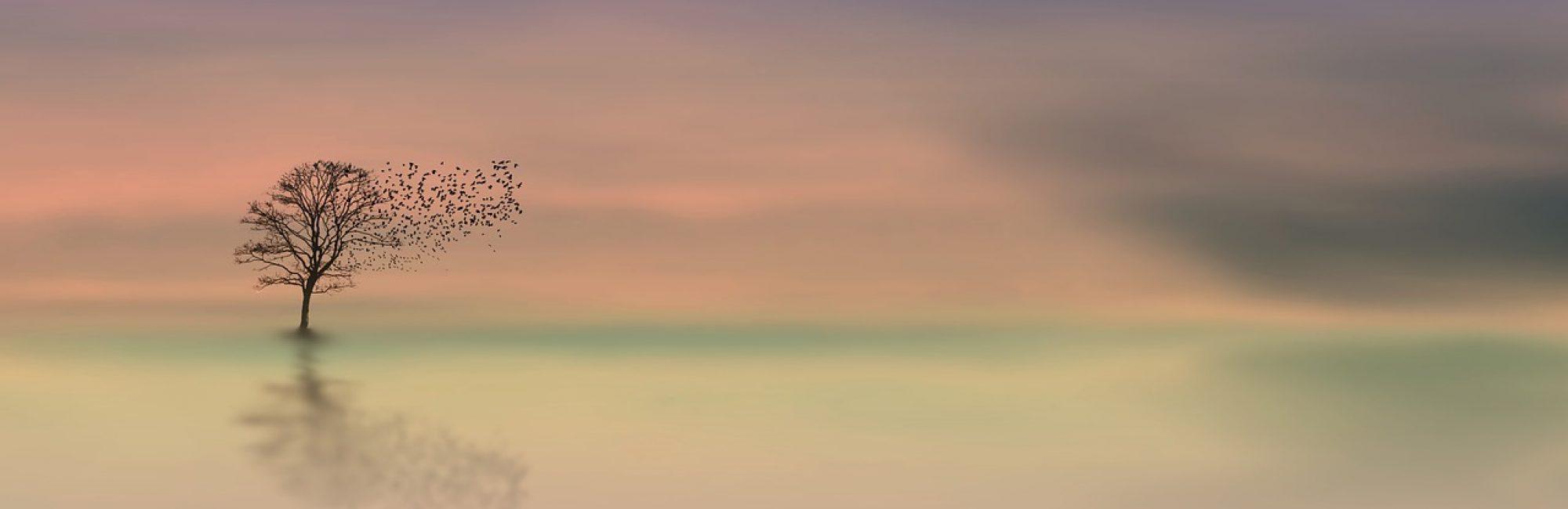 dawn-3358468_1280[1]